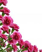 Bouquet of flowers carnation — Stock Photo