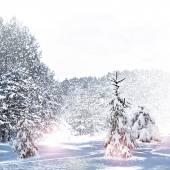 Winter Forest. Winter landscape. — Stock Photo