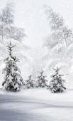 Winter Forest. Winter landscape. — Stock Photo
