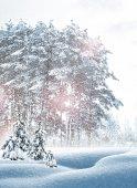 Winter forest. winterlandschap. — Stockfoto