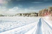Vintern skog. landskap. — Stockfoto