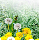 Spring landscape with a young grass — Stock Photo