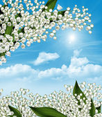 The branch of white flowers lily of the valley on a background o — Stock Photo