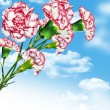 Carnation flowers on a background of blue sky with clouds — Stock Photo #63572323