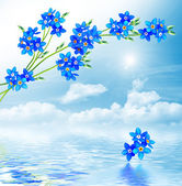 Forget-me-not flowers on a background of blue sky with clouds — Stock Photo