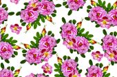 Floral background. briar — Stock Photo