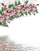 Alstroemeria flower isolated on white background — Stock Photo