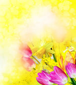 Pink and yellow flowers tulips and daffodils — Stock Photo