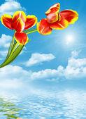Jarní květiny tulipány izolovaných na bílém pozadí — Stock fotografie