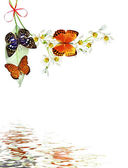 Branch of flowers and butterflies isolated on a white background — Stock Photo