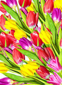Floral background of flowers tulips — Stock Photo