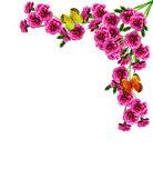 Çiçekler karanfil buketi — Stok fotoğraf
