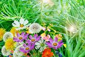 Paysage d'été. fleurs. — Photo