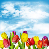 Spring flowers tulips on the background of blue sky with clouds — Stock Photo