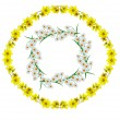 Yellow wildflowers isolated on a white background — Stock Photo #69777459