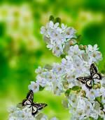 Blommande äppelträd — Stockfoto