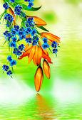 Lirio de flores — Foto de Stock