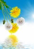 Landscape dandelion flower — Stock Photo