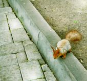 Squirrel runs on the road in the park — Stock Photo