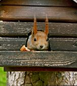 Squirrel in the park at the lodge — Stock Photo