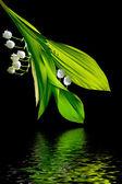 Gałęzi lilii Dolina kwiatów na białym tle na czarny bac — Zdjęcie stockowe