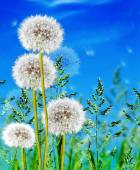Green grass on blue sky background — Stock Photo