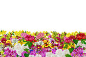 Flowers isolated on white background — Stock Photo
