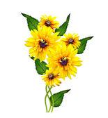 Yellow rudbeckia flower on a white background — Stock Photo