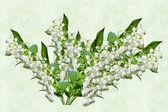 Tle kwiatów. Kwiatów konwalie — Zdjęcie stockowe