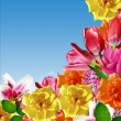 Holiday card. flowers roses, tulips, lilies — Stock Photo #78067372