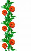 Zinnia flowers isolated on white background — Stock Photo