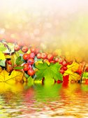 Background from autumn leaves and berries rowan — Stock Photo