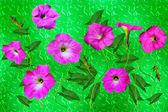 矮牵牛的花。花卉背景 — 图库照片
