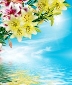 Lily flowers on a background of blue sky with clouds — Stock Photo