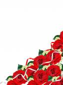 Holiday card. Red roses on a white background — Stock Photo
