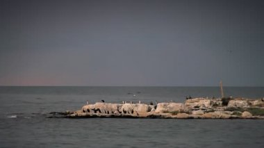 Birds on a coastline of an uninhabited small island — Stock Video