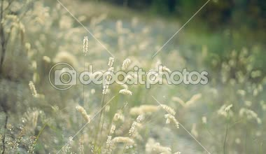 Grassland with wild plants — Video Stock