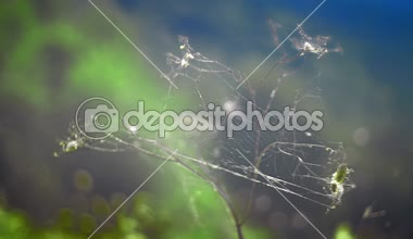 Spider net over dry wild plant — Stock Video
