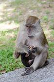 Monkeys carrying her child — Stock Photo