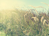 Flower grass Vintage — Stock Photo