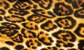 Stof patroon tijger — Stockfoto