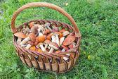 Orange-cap boletus — Stock Photo