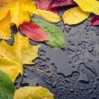 Wet leaves yellow red green — Stock Photo #53342171