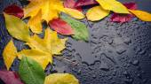 Wet leaves yellow red green — Stock Photo