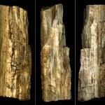 ������, ������: Petrified tree trunk