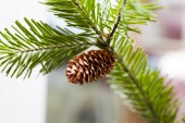Cones on a fir-tree — Stock Photo