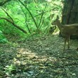 Wild Roe Deer And Fawns — Stock Video #56042455