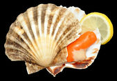 Raw King Scallop Clam — Stock Photo