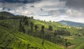 Agricultural land in Nilgiris near Ooty, Tamilnadu, India — Stock Photo