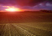 Undulating farmland at sunset — Stock Photo